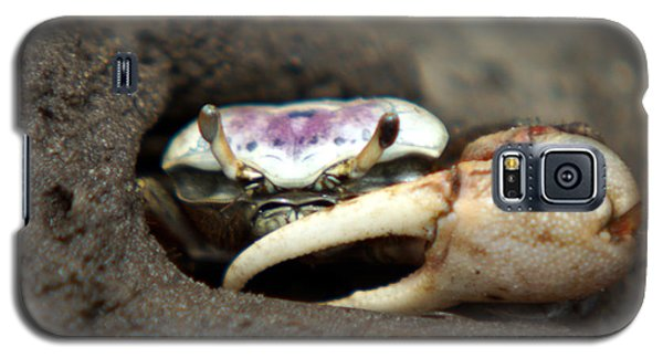A Fiddler Crab Around Hilton Head Island Galaxy S5 Case by Kim Pate