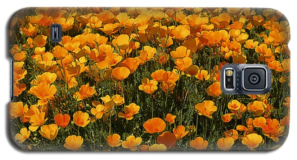 A Field Of Poppies Galaxy S5 Case by Phyllis Denton