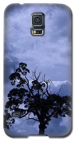 A Flash Of Blue Tree Galaxy S5 Case