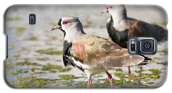 A Flock Of Southern Lapwings Galaxy S5 Case