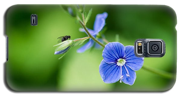 A Flower And A Fly - Featured 3 Galaxy S5 Case by Alexander Senin