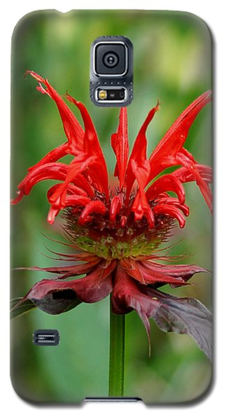 A Flowering Red Castle Beauty Galaxy S5 Case by Kim Pate
