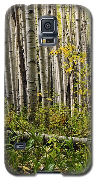 A Forest Of Aspen Galaxy S5 Case