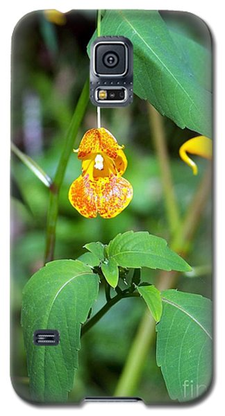 Galaxy S5 Case featuring the photograph A Fragile Flower by Chalet Roome-Rigdon