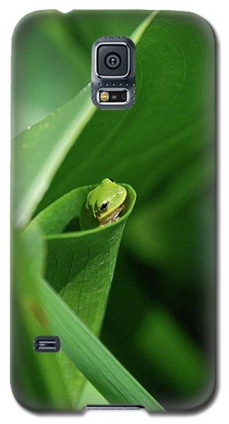 A Gardens Pocket Galaxy S5 Case