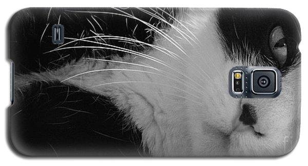 A Gentle Cat - Monochrome Galaxy S5 Case by David Warrington