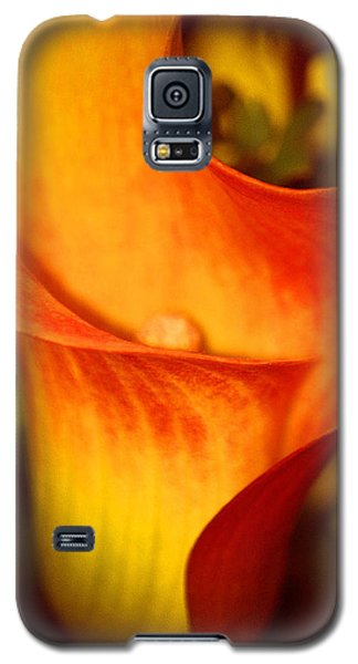 Galaxy S5 Case featuring the photograph A Gift From Above by The Art Of Marilyn Ridoutt-Greene