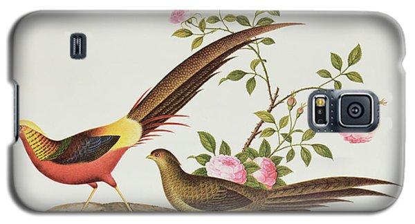 A Golden Pheasant Galaxy S5 Case