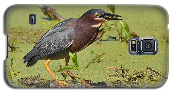Galaxy S5 Case featuring the photograph A Greenbacked Heron's Breakfast by Kathy Baccari