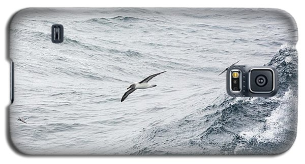 A Grey Headed Albatross Galaxy S5 Case