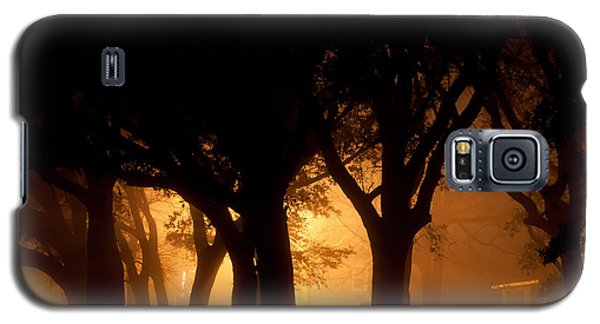 A Grove Of Trees Surrounded By Fog And Golden Light Galaxy S5 Case