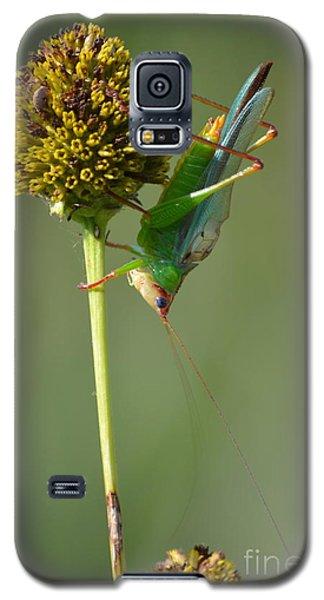 A Handsome Meadow Katydid Galaxy S5 Case