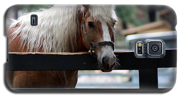 A Hilton Head Island Horse Galaxy S5 Case by Kim Pate