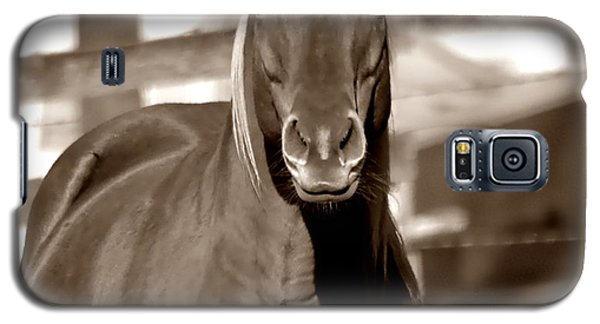 Galaxy S5 Case featuring the photograph A Horse Is A Horse by Deena Stoddard