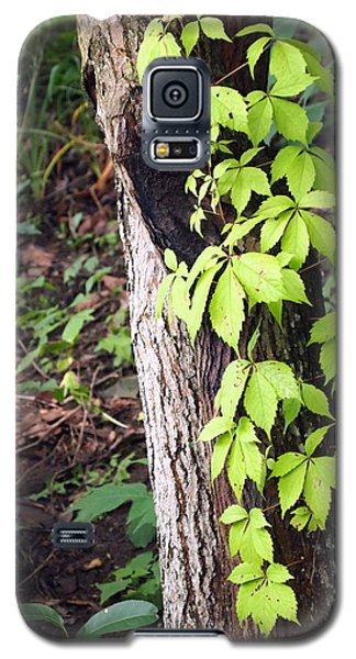 Galaxy S5 Case featuring the photograph A Journey To The Canopy by Deborah Fay