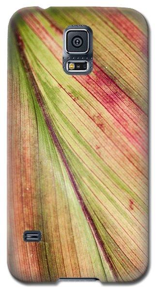 A Leaf Galaxy S5 Case