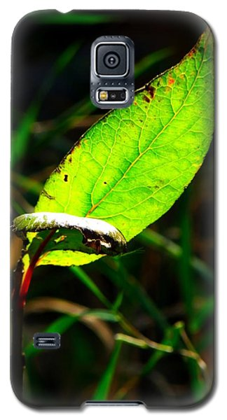 Galaxy S5 Case featuring the photograph A Leaf... by Tim Fillingim
