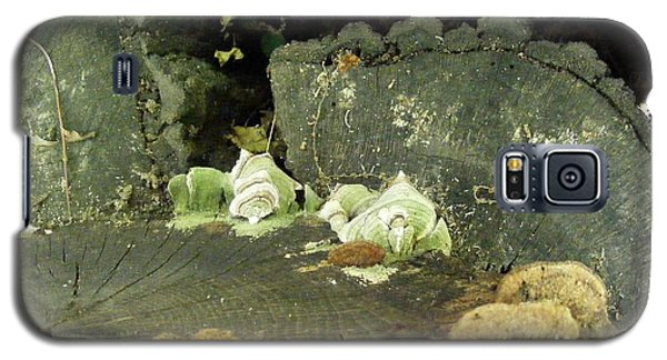 Galaxy S5 Case featuring the photograph A Lichen Family  by Nancy Kane Chapman
