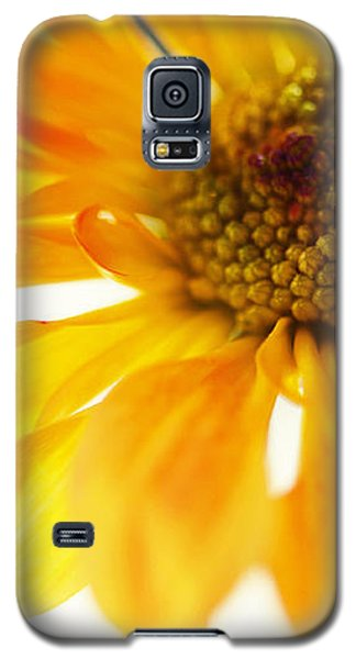 A Little Bit Sun In The Cold Time Galaxy S5 Case