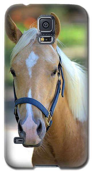 Galaxy S5 Case featuring the photograph A Loyal Friend by Gordon Elwell