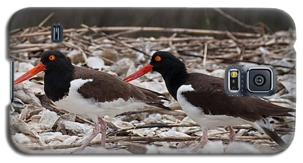 A Mated Pair Of Oyster Catchers Galaxy S5 Case
