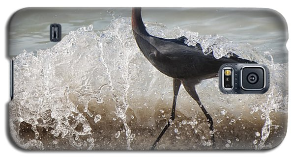 Galaxy S5 Case featuring the photograph A Morning Stroll Interrupted by Gary Slawsky