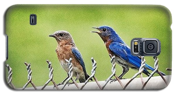 Nesting Bluebirds Galaxy S5 Case by Heidi Hermes
