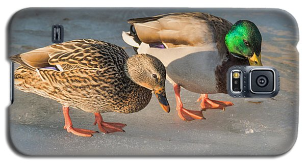 A Pair Of Mallards On Frozen Lake Galaxy S5 Case by Gerda Grice