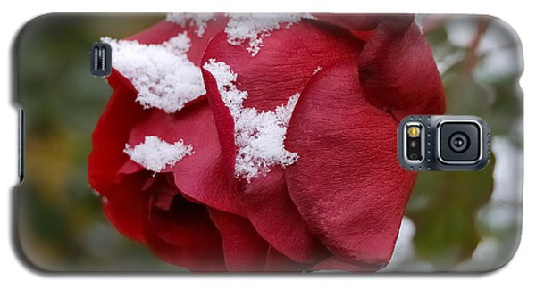 A Passing Unrequited - Rose In Winter Galaxy S5 Case