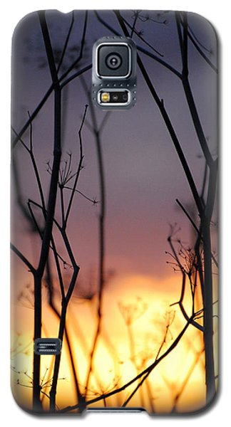 Galaxy S5 Case featuring the photograph A Queen's Sunset by Jani Freimann