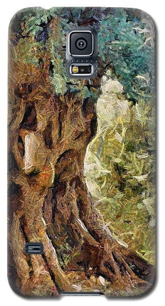 A Really Old Olive Tree Galaxy S5 Case