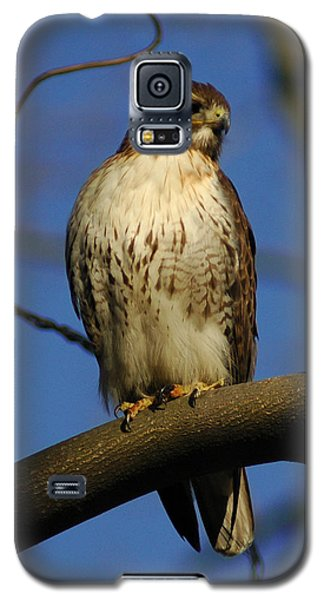 Galaxy S5 Case featuring the photograph A Red Tail Hawk by Raymond Salani III