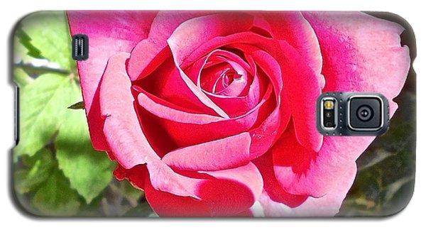 A Rose Is Galaxy S5 Case