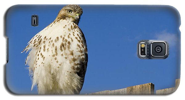 A Rough Legged Hawk On The Hunt Galaxy S5 Case by MaryJane Armstrong