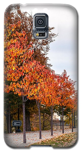 A Row Of Autumn Trees Galaxy S5 Case
