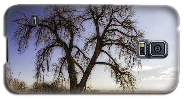 Galaxy S5 Case featuring the photograph A Simple Tree by Kristal Kraft