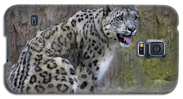 A Snow Leopards Tongue Galaxy S5 Case by David Millenheft