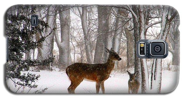 A Snowy Path Galaxy S5 Case by Elizabeth Winter