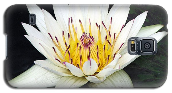 Botanical Beauty Galaxy S5 Case