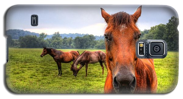 A Starring Horse 2 Galaxy S5 Case