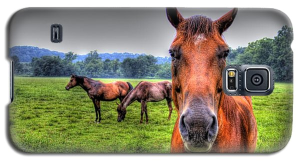 A Starring Horse Galaxy S5 Case