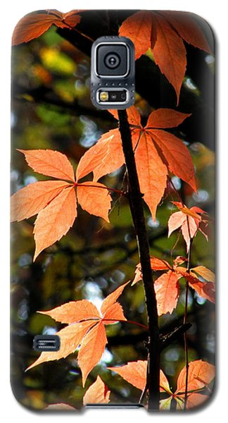 Galaxy S5 Case featuring the photograph A Strand Of Leaves I by Kimberly Mackowski