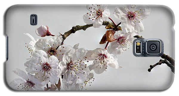 A Touch Of Spring Galaxy S5 Case