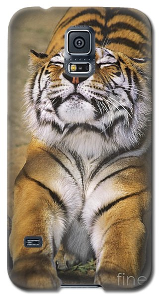 A Tough Day Siberian Tiger Endangered Species Wildlife Rescue Galaxy S5 Case