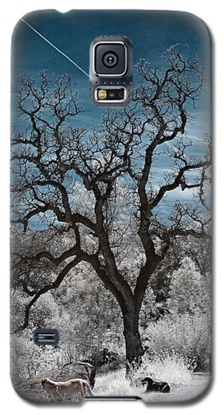 A Trail Not Taken Galaxy S5 Case