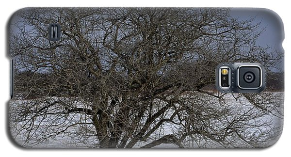 Galaxy S5 Case featuring the photograph A Tree In Canaan 2 by Randy Bodkins