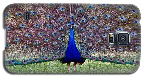 Galaxy S5 Case featuring the photograph A Vargos Peacock by Tim Stanley