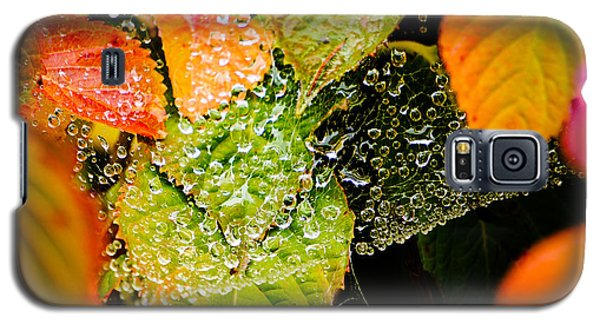Galaxy S5 Case featuring the photograph A Web Of Rain by Ronda Broatch