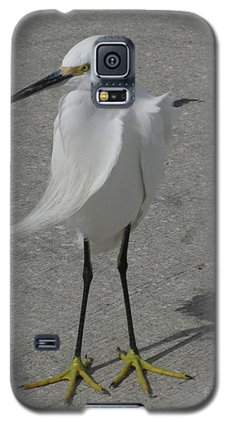 Galaxy S5 Case featuring the photograph A Windy Day by Donna Brown