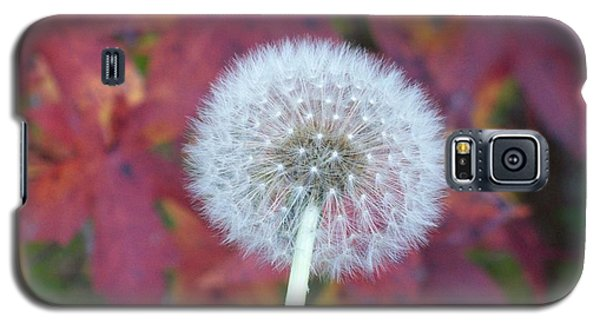 A Wish For You Galaxy S5 Case by Robin Coaker